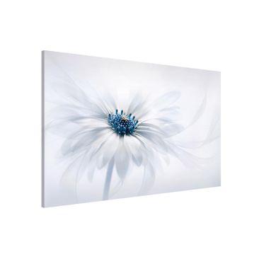 Produktfoto Magnettafel - Gänseblümchen in Blau - Memoboard Quer 2:3