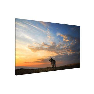 Produktfoto Magnettafel - Löwe im Sonnenuntergang -...