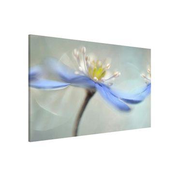 Immagine del prodotto Lavagna magnetica - Dancing Anemones - Formato orizzontale 3:2