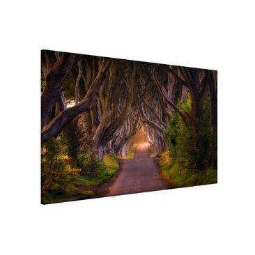 Immagine del prodotto Lavagna magnetica - Tunnel from Trees -...