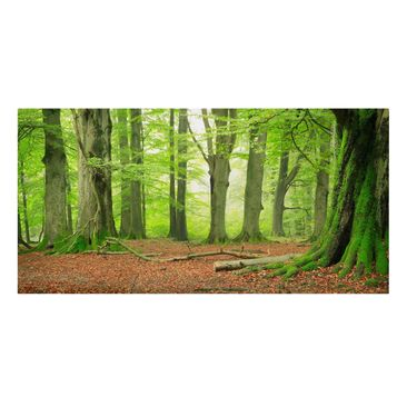 Product picture Canvas Art - Mighty Beech Trees -...