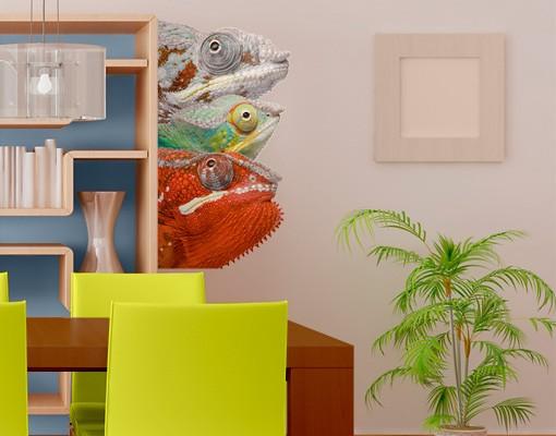 Produktfoto Wandtattoo No.456 Colorful Chameleon