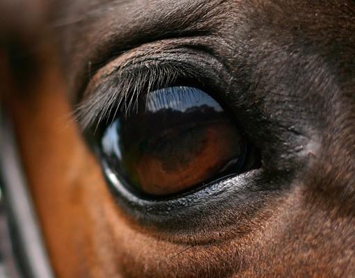 Produktfoto Selbstklebendes Wandbild Horse Eye