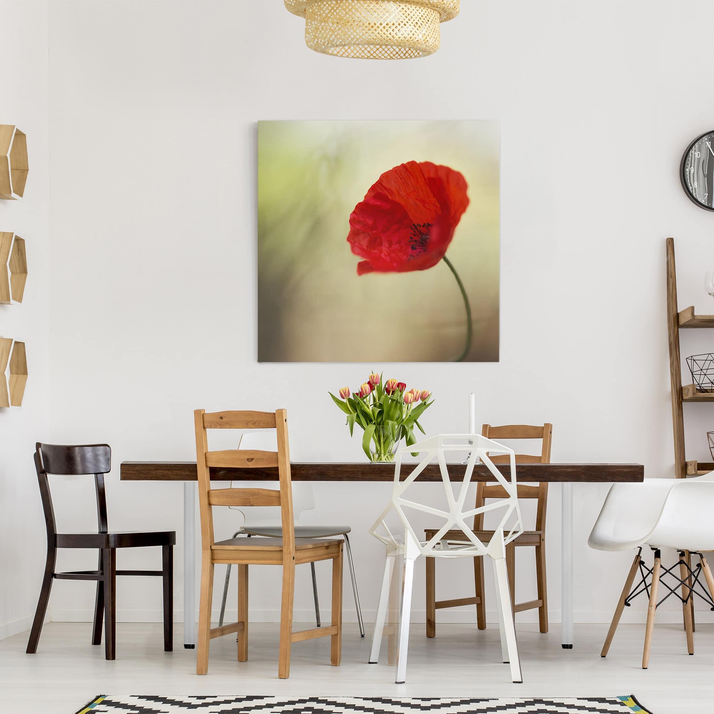 leinwandbild mohnbl te im garten quadrat 1 1. Black Bedroom Furniture Sets. Home Design Ideas