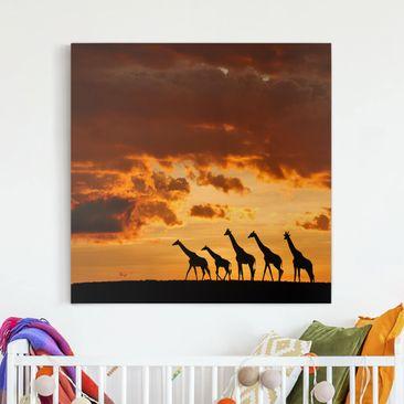 Produktfoto Leinwandbild - Fünf Giraffen - Quadrat 1:1, vergrößerte Ansicht in Wohnambiente, Artikelnummer 212174-XWA