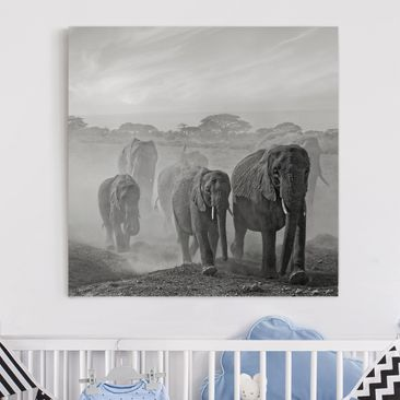 Produktfoto Leinwandbild - Elefantenherde - Quadrat 1:1, vergrößerte Ansicht in Wohnambiente, Artikelnummer 212274-XWA
