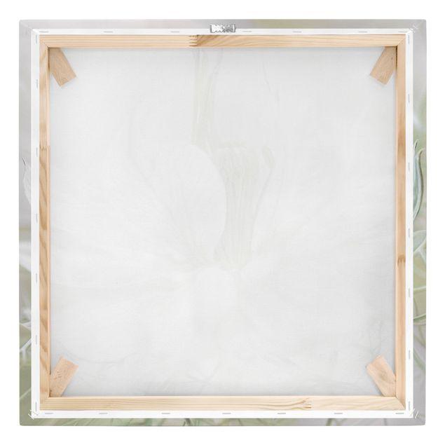 Produktfoto Leinwandbild - Weiße Nigella - Quadrat 1:1, Keilrahmen Rückseite, Artikelnummer 212331-FB
