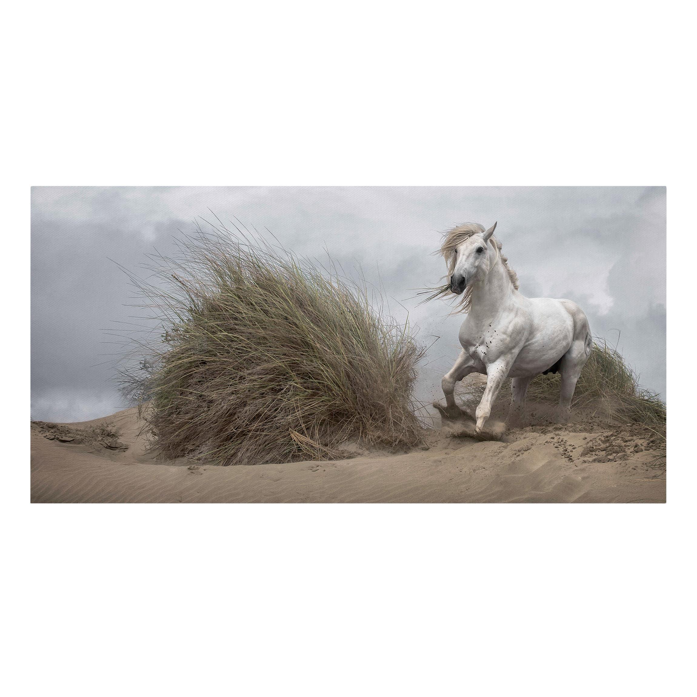 Canvas Art White Horse In The Dunes Landscape Format 1 2
