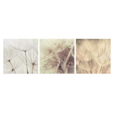 Product picture Canvas Art Three-part - Dandelions And...