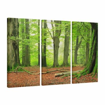 Product picture Canvas Art Three-part - Mighty Beech...