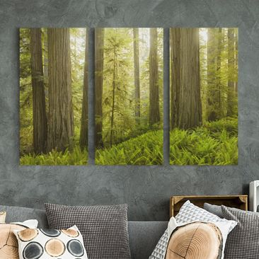 Product picture Canvas Art Three-part - Redwood State...