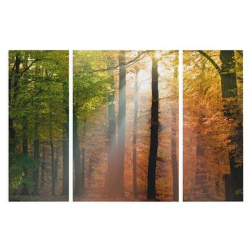 Product picture Canvas Art Three-part - Morning Light -...