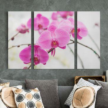 Produktfoto Leinwandbild 3-teilig - Nahaufnahme Orchidee - Triptychon, vergrößerte Ansicht in Wohnambiente, Artikelnummer 213347-XWA