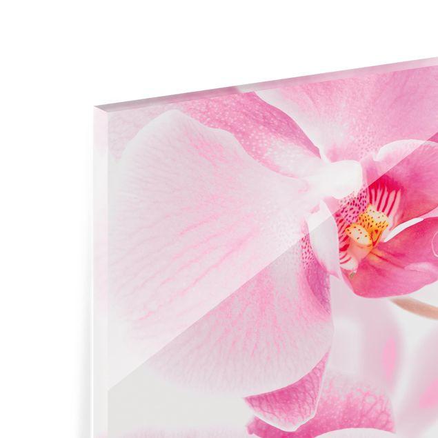 Produktfoto Spritzschutz Glas - Delicate Orchids - Panorama Quer