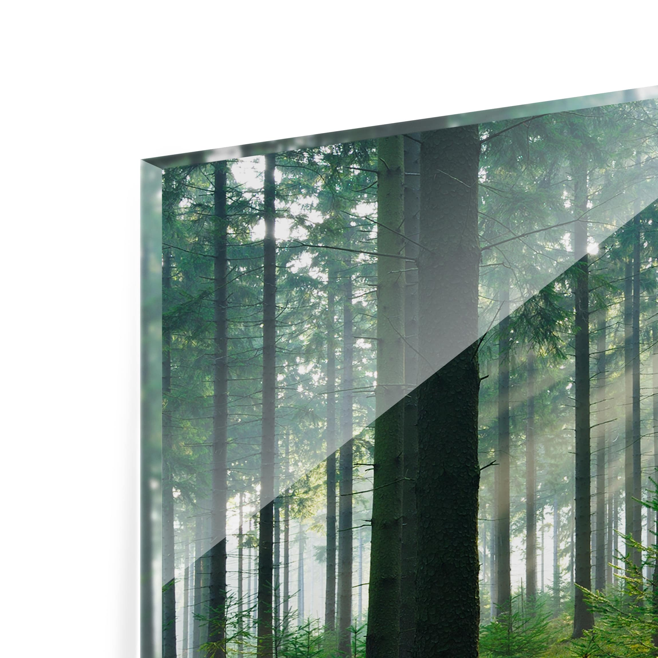 Spritzschutz glas enlightened forest panorama quer for Spritzschutz glas