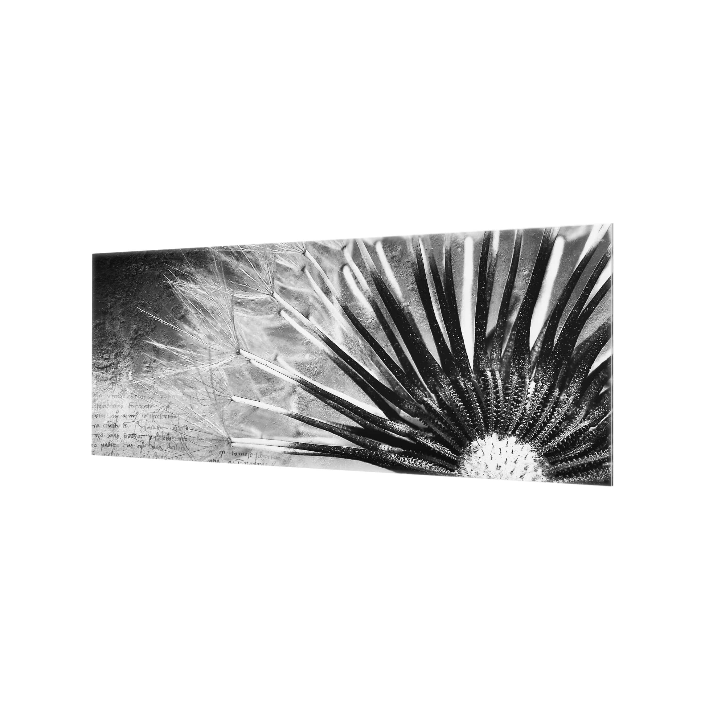 Bilderwelten Spritzschutz Glas Pusteblumen schwarzer Hintergrund Panorama Quer 40cm x 100cm