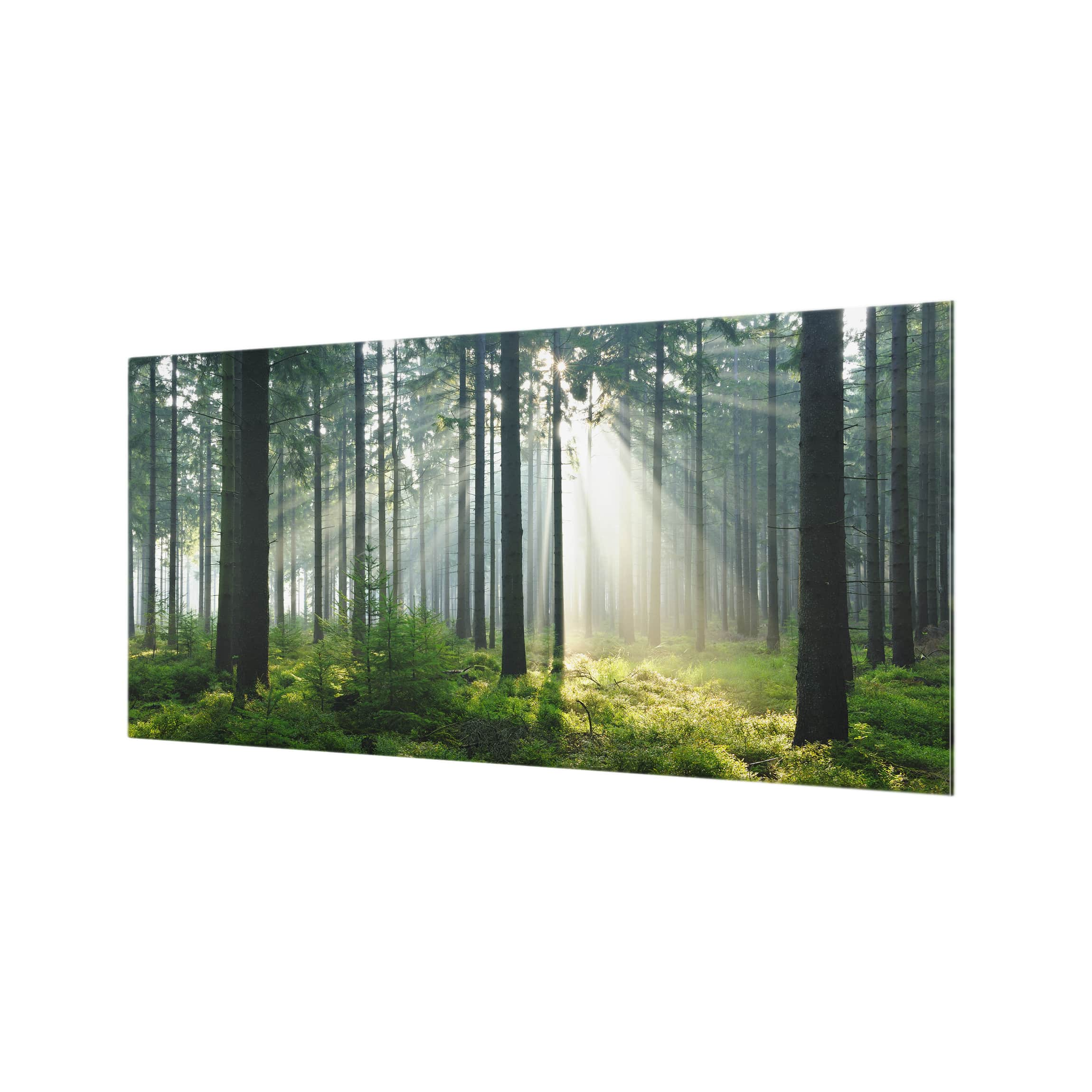 Spritzschutz glas enlightened forest quer 1 2 for Spritzschutz glas