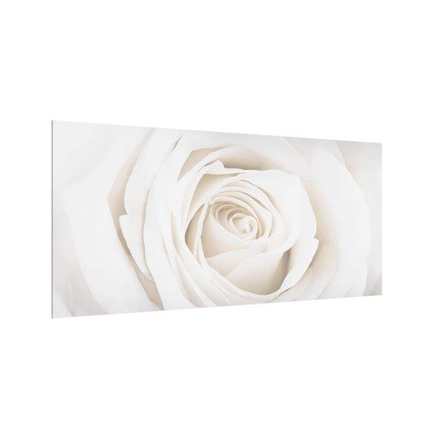 Produktfoto Spritzschutz Glas - Pretty White Rose - Quer 1:2
