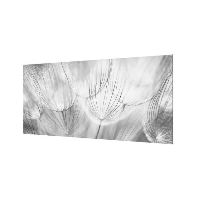 Produktfoto Spritzschutz Glas - Pusteblumen Makroaufnahme in schwarz weiß - Quer 1:2