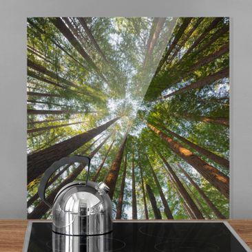 Immagine del prodotto Paraschizzi in vetro - Sequoia Tree Tops - Quadrato 1:1
