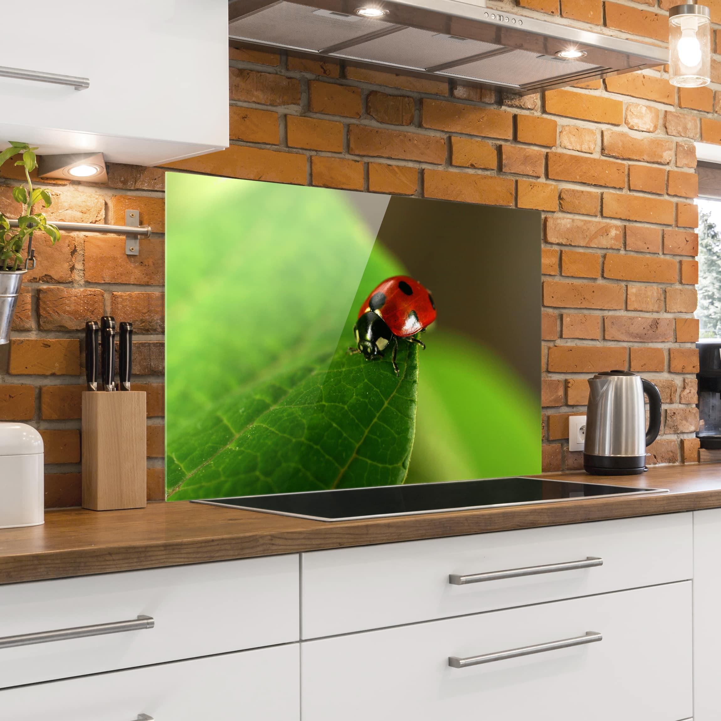 spritzschutz glas lady bird quer 2 3. Black Bedroom Furniture Sets. Home Design Ideas