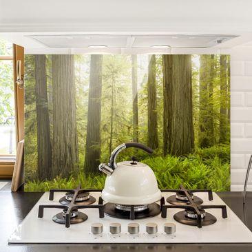 Immagine del prodotto Paraschizzi in vetro - Redwood State Park Forest View - Orizzontale 2:3