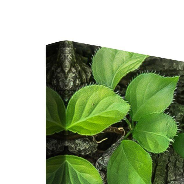 Produktfoto Leinwandbild 5-teilig - Efeuranken Baumrinde, Keilrahmen Rückseite, Artikelnummer 216076-FB