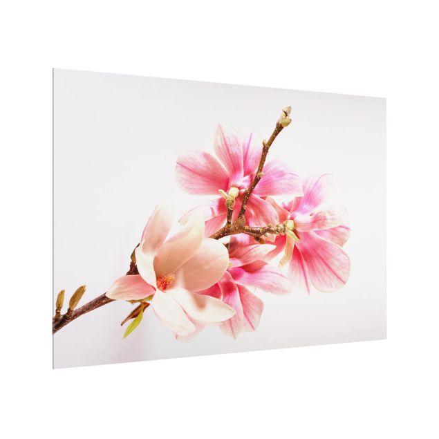Produktfoto Spritzschutz Glas - Magnolienblüten - Quer 3:4