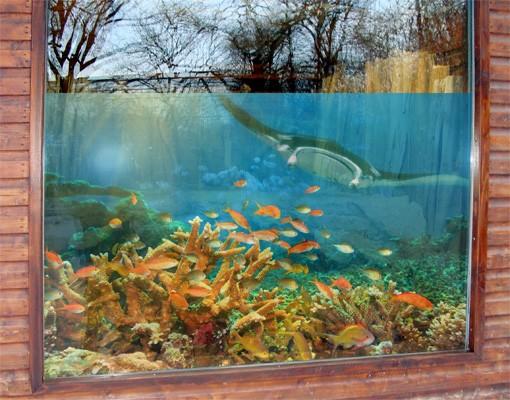 Produktfoto Fensterfolie - Sichtschutz Fenster Korallenriff - Fensterbilder