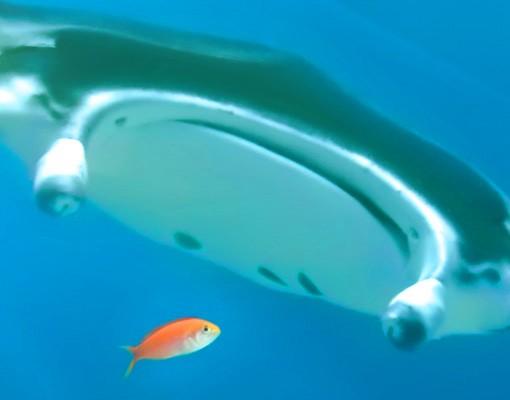 Produktfoto Selbstklebendes Wandbild Korallenriff