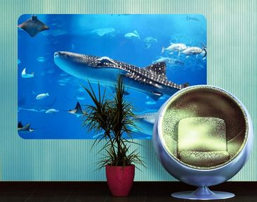 Produktfoto Wall Mural Fish in the Sea