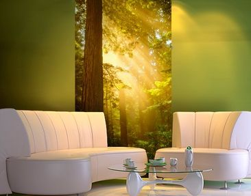 Produktfoto Photo Wall Mural Morning Gold