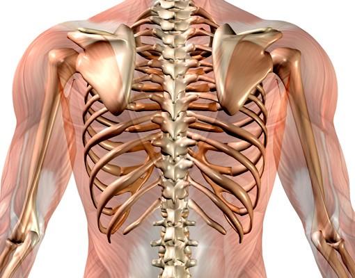 Produktfoto Wandtattoo No.470 Anatomischer Bewegungsablauf
