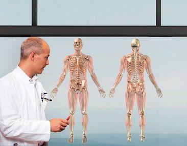 Produktfoto Window Sticker no.474 Human Anatomy