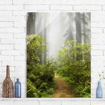 Produktfoto Glasbild - Nebliger Waldpfad - Hoch 4:3