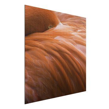 Immagine del prodotto Stampa su alluminio spazzolato - Flamingo Feathers - Quadrato 1:1