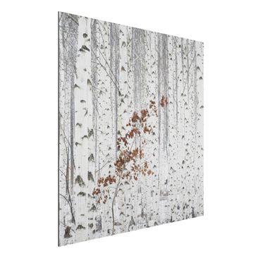 Produktfoto Aluminium Print gebürstet - Birken im Herbst - Quadrat 1:1
