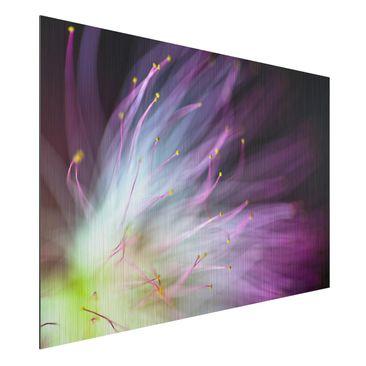 Produktfoto Aluminium Print gebürstet - Blütenstaub - Querformat 2:3