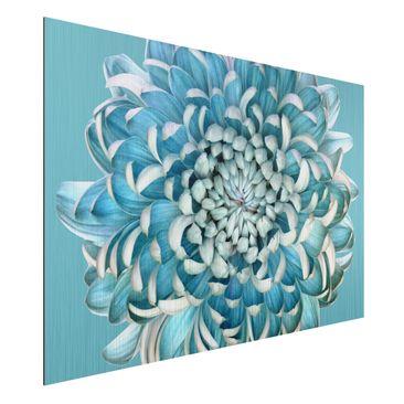 Produktfoto Aluminium Print gebürstet - Blaue Chrysantheme - Querformat 2:3