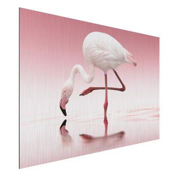 Produktfoto Aluminium Print gebürstet - Flamingo...