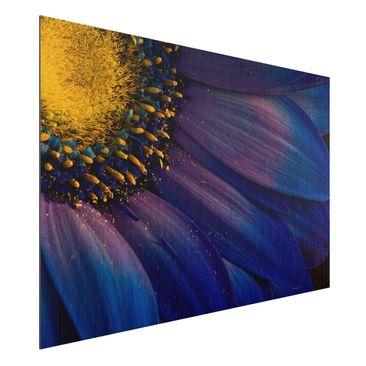 Produktfoto Aluminium Print gebürstet - Blaue Gerberablüte - Querformat 2:3