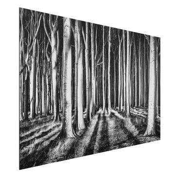 Produktfoto Aluminium Print gebürstet - Geisterwald - Querformat 2:3