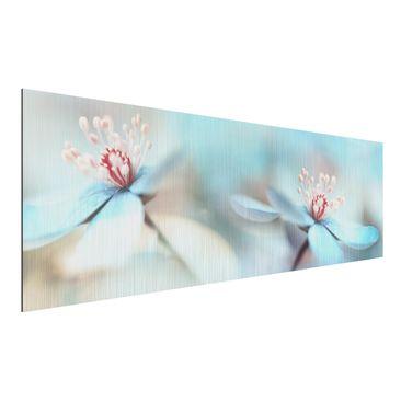 Produktfoto Aluminium Print gebürstet - Blüten in Hellblau - Panorama Querformat