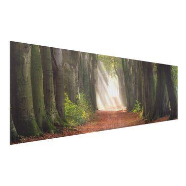 Immagine del prodotto Stampa su alluminio spazzolato - Glorious Day In The Forest - Panoramico