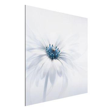 Immagine del prodotto Stampa su alluminio - Daisy - Quadrato 1:1