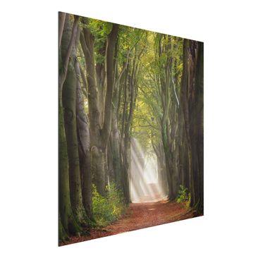 Produktfoto Aluminium Print - Herrlicher Tag im Wald - Quadrat 1:1