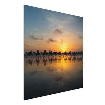 Produktfoto Aluminium Print - Kamele im Sonnenuntergang - Quadrat 1:1