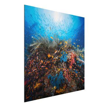Immagine del prodotto Stampa su alluminio - Lagoon Underwater - Quadrato 1:1