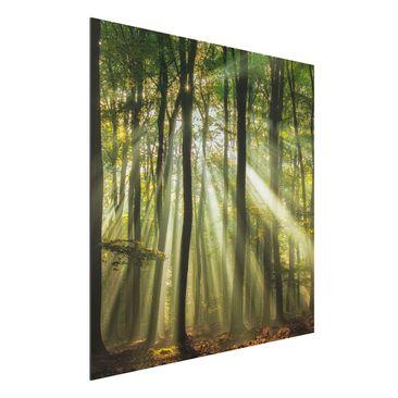 Produktfoto Aluminium Print - Sonnentag im Wald - Quadrat 1:1