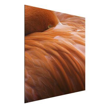 Produktfoto Aluminium Print - Flamingofedern - Quadrat 1:1
